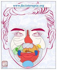 Facioterapia-organos